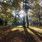 Lichtvolles Bild von Hohengatow